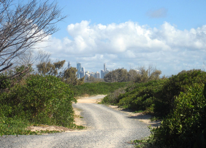 The buildings of Surfers Paradise seen from bushland at The Spit