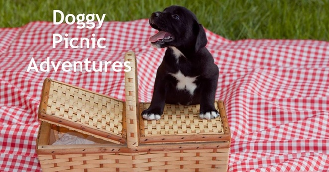 Take,your,dog,on,a,picnic