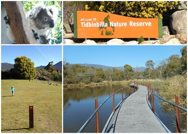 tidbinbilla, short walks, canberra, walks for families, kids, the sanctuary, ACT, koalas, australian animals, national parks,