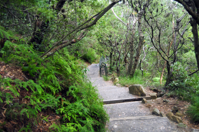 trail to fletchers Lookout