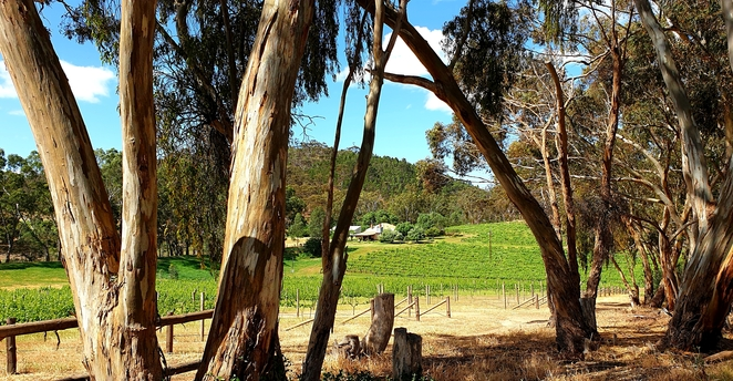 Views, nature, South Australia, winery, history