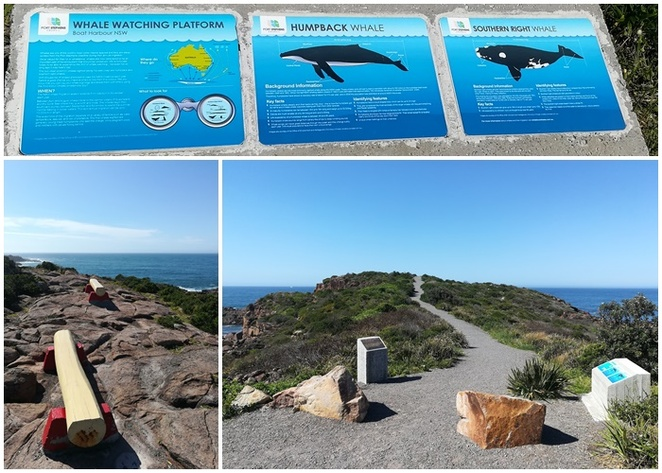 whale watching, boat harbour, port stephens, nelson bay, places to see whales, land, views, lookouts, best, whale watching, platforms, NSW,