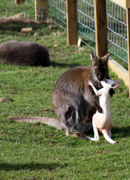 Animals, zoos, farms, outdoors, natural bushland, family outings, wildlife reserve, endangered animals, holiday ideas, community gardens