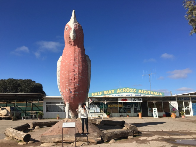 big things, australia, road trip, attraction, tourist, queensland, melbourne, adelaide, victoria, south australia, big galah, kimba, galah, halfway across australia