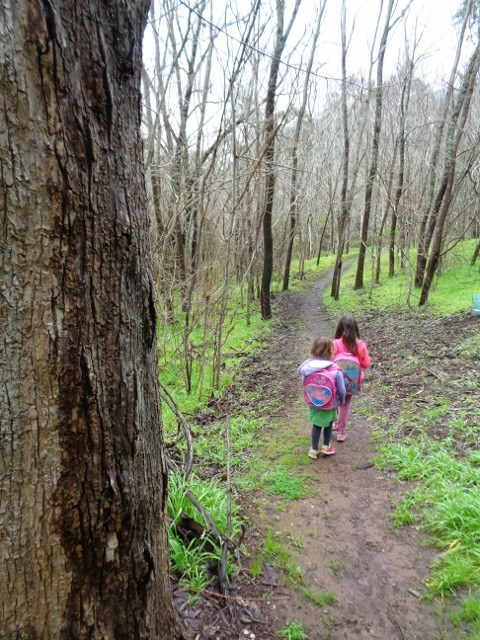 Bushwalks for children in Adelaide