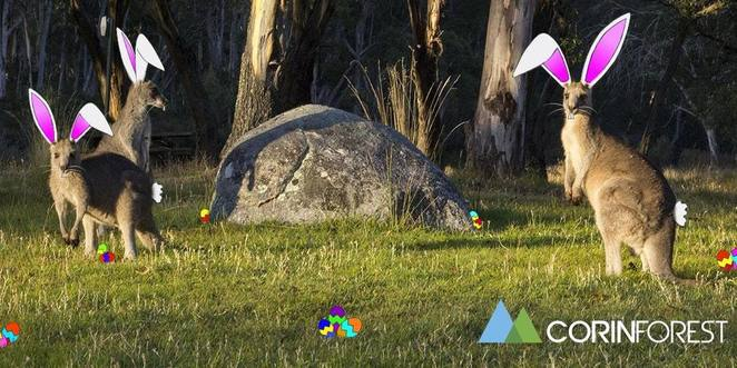 corin forest, easter egg hunt, 2018, canberra, easter egg hunts in canberra, easter, what's on, kids, activities,