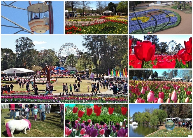 floriade, canberra, ACT, road trip from sydney, flower festival, things to do, festivals in canberra, best, spring, when to visit canberra, whats on, ACT, canberra events,