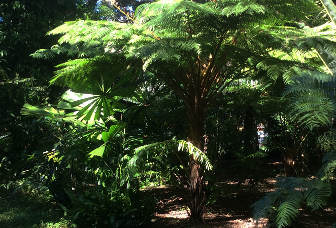 Gardens, Gardening, Free, Walks, Tours, Hervey Bay, Near Maryborough, Tourist Attractions, Learn Something