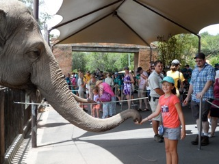 Hand feed elephants at Australia Zoo