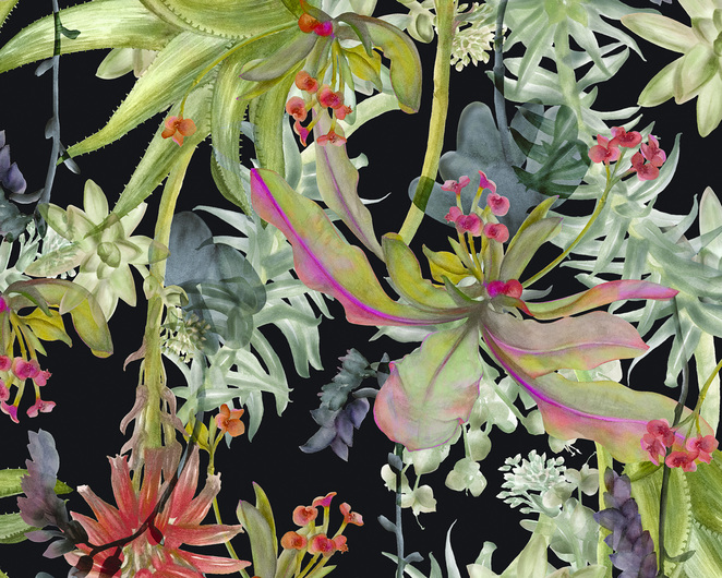 Illustrations, botanical, NGV, National Gallery of Victoria, drawing, studio, class, workshop