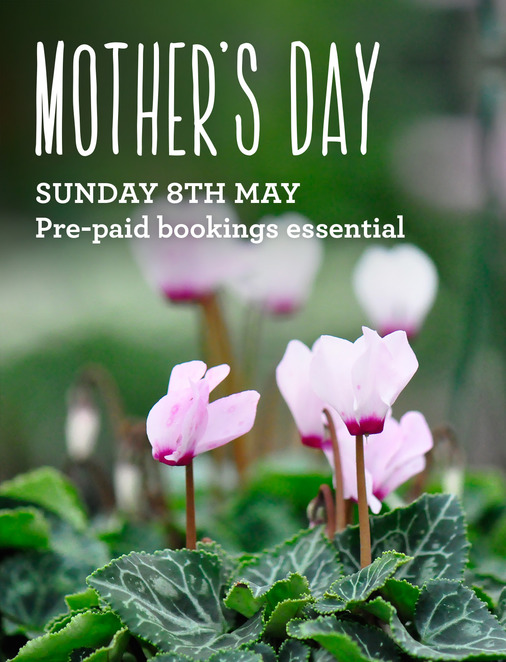 Mothers Day at Wild Canary