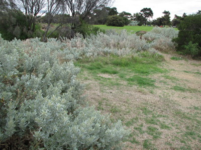 PA Burns Reserve, Seaholme, dogs off leash parks, melbourne, dogs