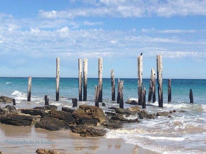Immerse yourself in a marine park adelaide for Port willunga