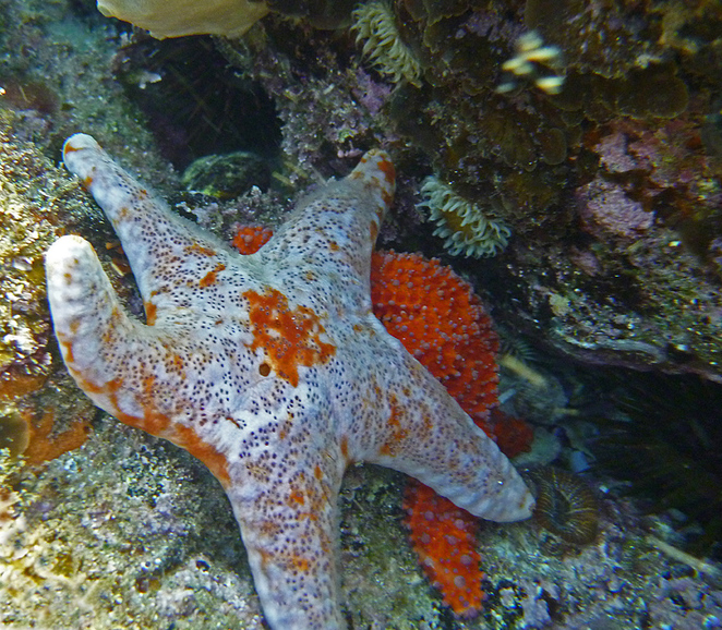 sea star, star wars