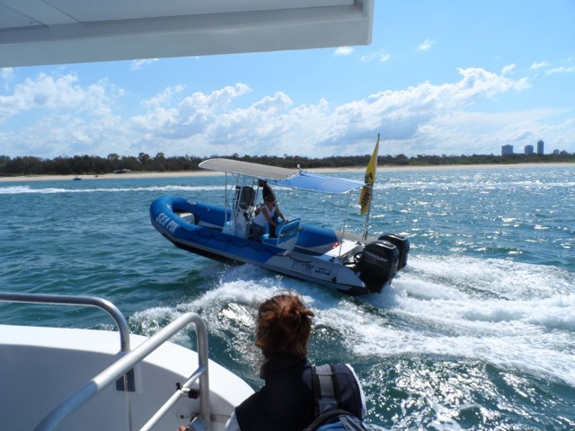 Whales in paradise, Whale watching Gold Coast, Gold Coast whale watching, whale cruises Gold Coast, whale season Gold Coast, go whale watching, best whale watching experience on the gold Coast, what's on Gold Coast, things to do Gold Coast, what's on Gold Coast