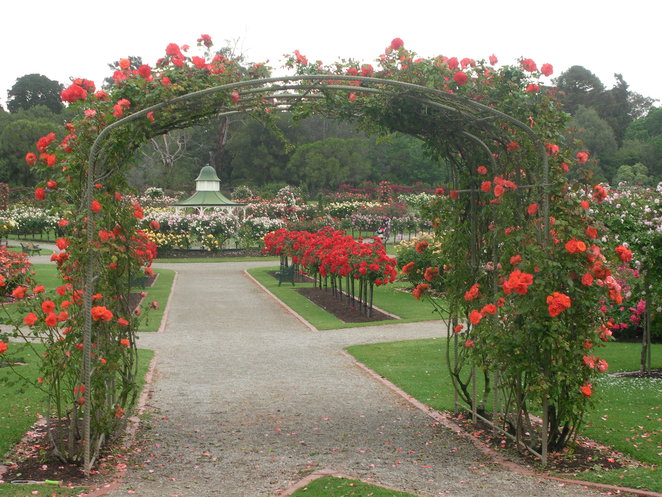 arch,red,roses,garden,state