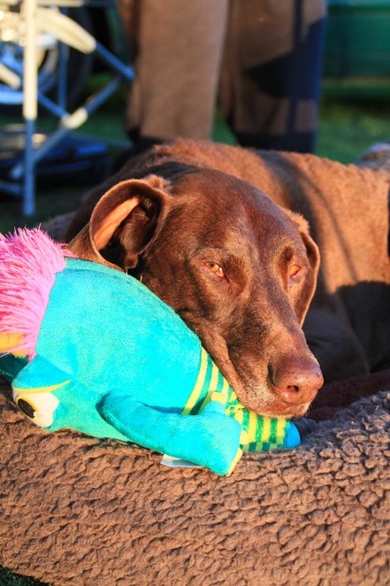 Best Friends Holiday Retreat, holidays with dogs, dog caravan park