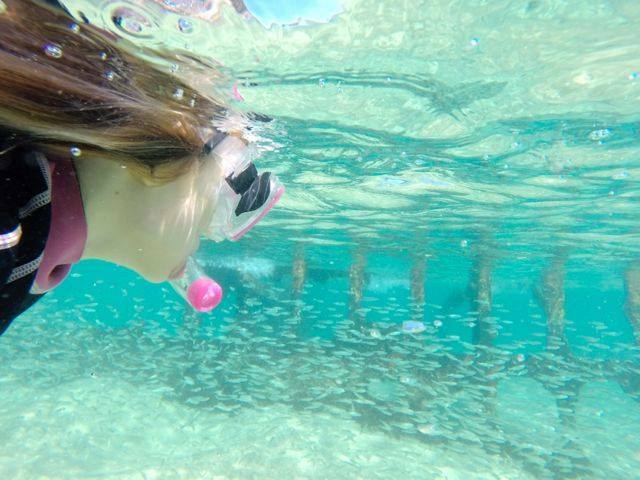 Bulwer Wrecks offer sheltered snorkeling that is fantastic for families at high tide