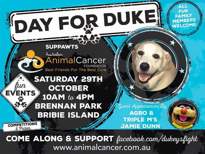 day for duke, dog friendly event, dogs, pets, cancer awareness, bribie island, brisbane, day trip, road trip, october 29 2016, animal cancer, animal research, family event, family day out, free family activities, dog grooming, glamour petz, dog washing, grooming parlour, dog accessories, pet shop, pet photography, jumping castle, face painting, raffles, pet treats, jamie dunn, triple m