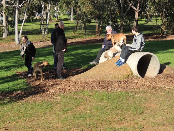 dog parks, south of adelaide, playground in, a playground, playground for children, park in adelaide, play equipment, exercise equipment, cc hood, socialising