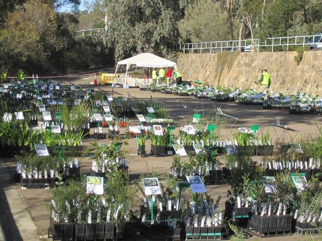 Five ways to get your garden growing this spring in Canberra