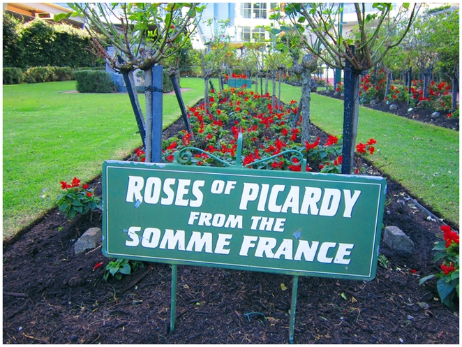 Garden of Remembrance, Chatswood, Willoughby, Anzac Day, Picardy Roses, Somme, France