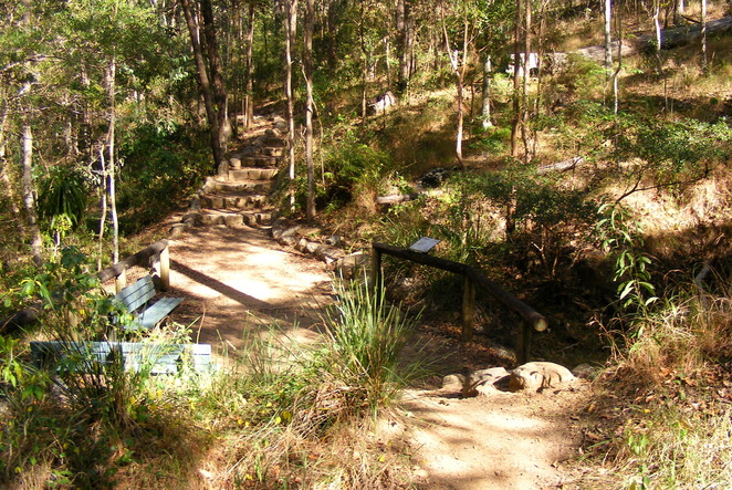 Ghost Hole Track to the abandoned gold mine at Mt Coot-tha