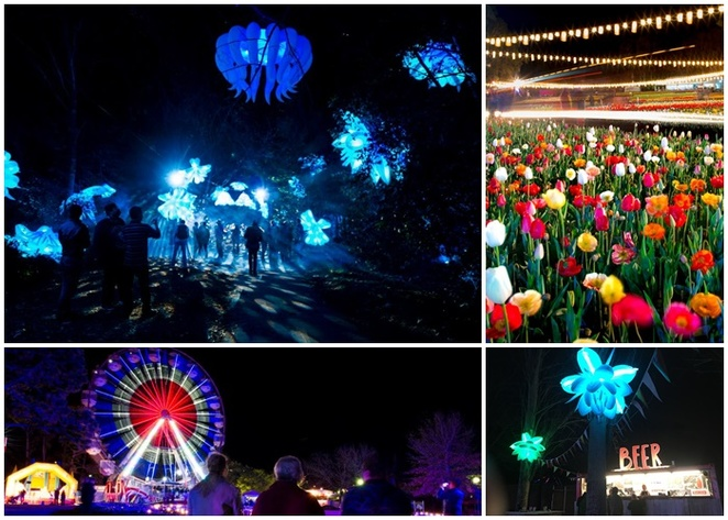 nightfest, floriade, canberra, ACT, things to see, highlights, best, children, entertainmnet, program, whats on, comedy, shows, lights, floral, festival, 2018, 2019, 2020,