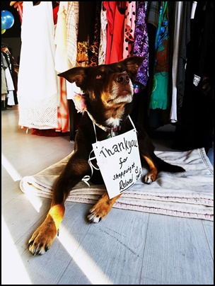 reloved,store,with,dog