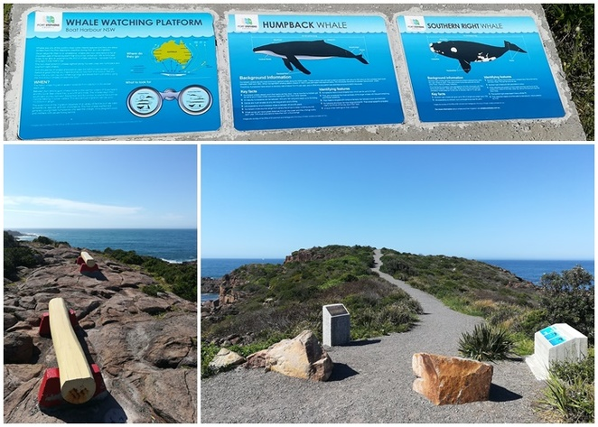whale watching, boat harbour, anna bay, lookouts, views, best places to look for whales, family friendly, headland, nelson bay, port stephens, NSW, tourist sites,