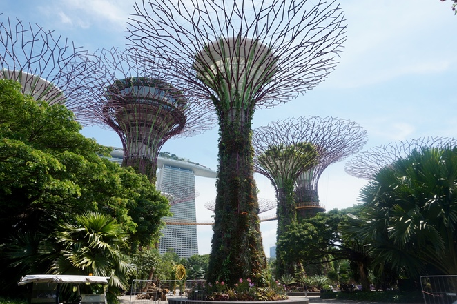 One of the Supertrees