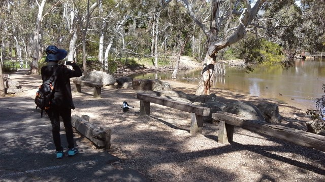 adelaide bushwalks, belair national park