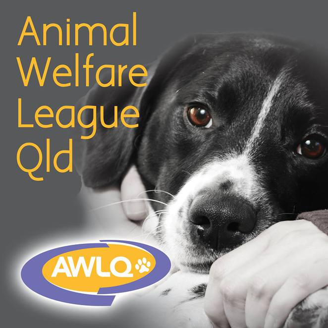 awlq, polite pets, dog behaviour seminar, gold coast, robina community centre, brisbane, dog event, dog seminar, behaviourist, animal management, charity, fundraiser, free refreshments, resource kit, training resources, big brother, mr clooney