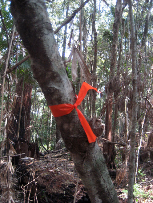 Some trails are marked by hiking club trail markers