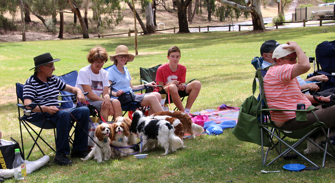 Cavalier King Charles Spaniel, Cavalier Capers, funday, family, spectators