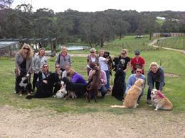 gourmet paw prints, dog day tours, vineyards, green olive winery