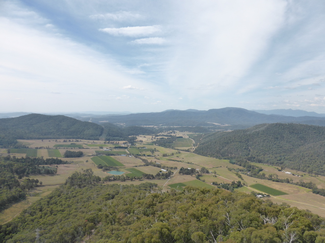 King Valley Power's lookout bush