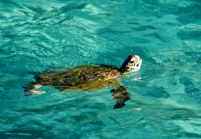 The gorge is a haven for a multitude of wildlife, including marine turtles who hunt for jellyfish within it