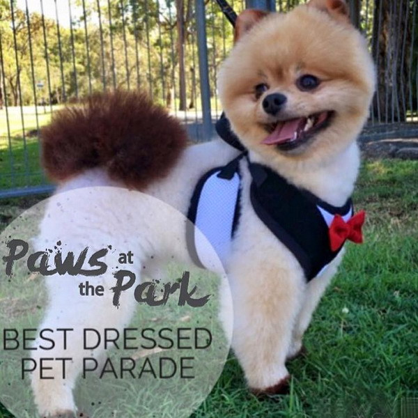 paws in the park,varsity lakes,doggie tea,vet collective,markets,oodle&co,