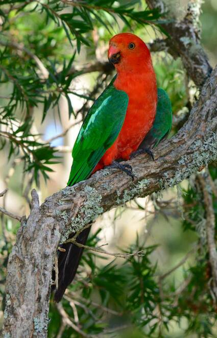 King parrots in a nearby tree were the perfect touch to our lunch in the country