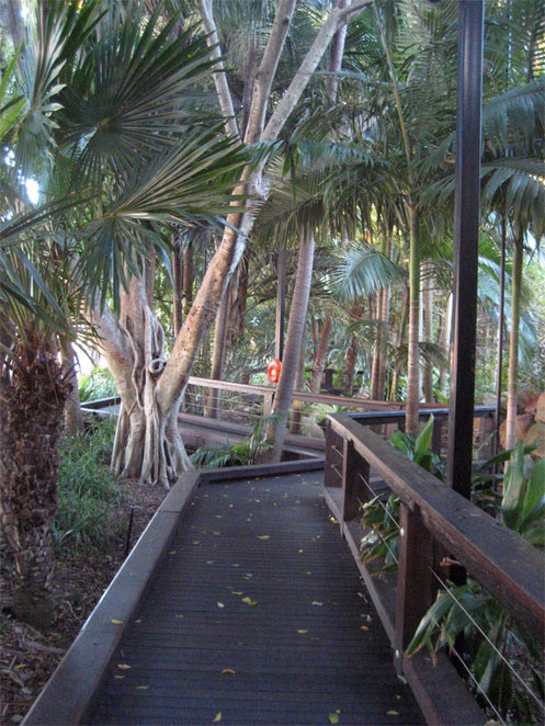 Rainforest at South Bank