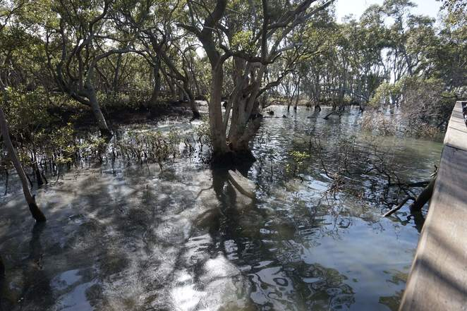 Tide coming into mangroves