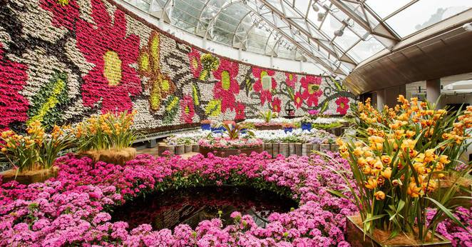 all about flowers at The Royal Botanic Garden, Sydney