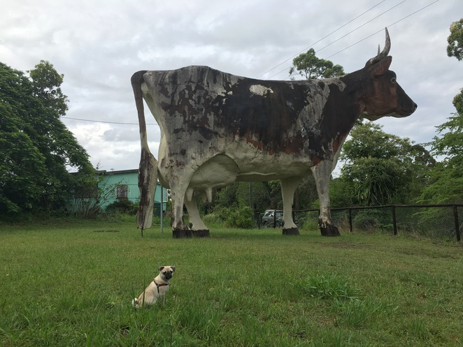 big things, australia, road trip, attraction, tourist, queensland, brisbane, cairns, sunshine coast, big cow, cow, abandoned, kulangoor