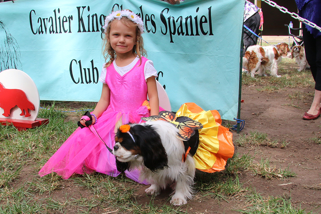 Cavalier, King, Charles, Spaniel, Capers, Funday, Fancy dress