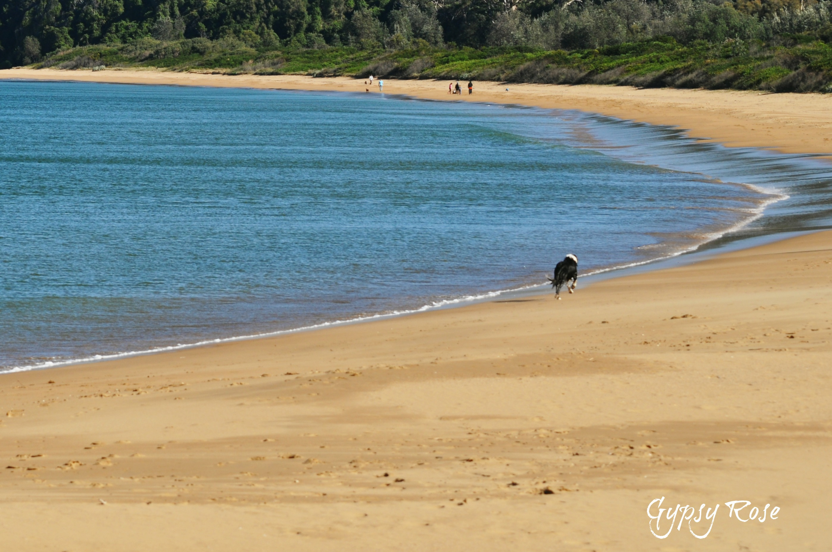 Dog Friendly Beach Walks Sydney