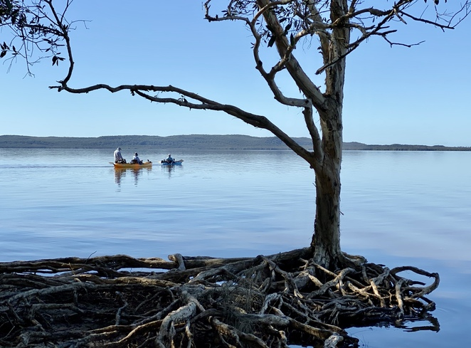 Hire watercraft, or take a guided tour, to explore the Noosa Everglades from Habitat Noosa Everglades Ecocamp