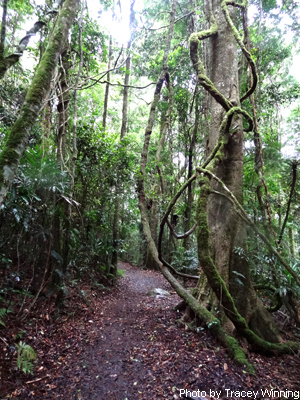 Hiking Trails Green Mountains, Gold Coast Hinterland, Green Mountains, lamington national park walks