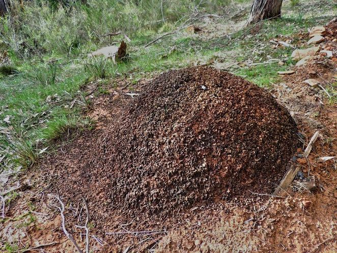 HK Fry Reserve, National Trust, National Trust of South Australia, South Australia, heritage buildings, reserve, park, crafers, crafers west, termite nest