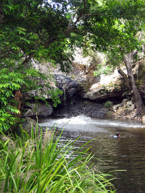 The swimming hole at Kondalilla falls